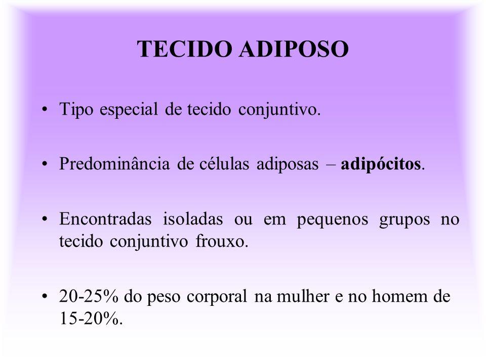 TECIDO ADIPOSO Tipo especial de tecido conjuntivo.