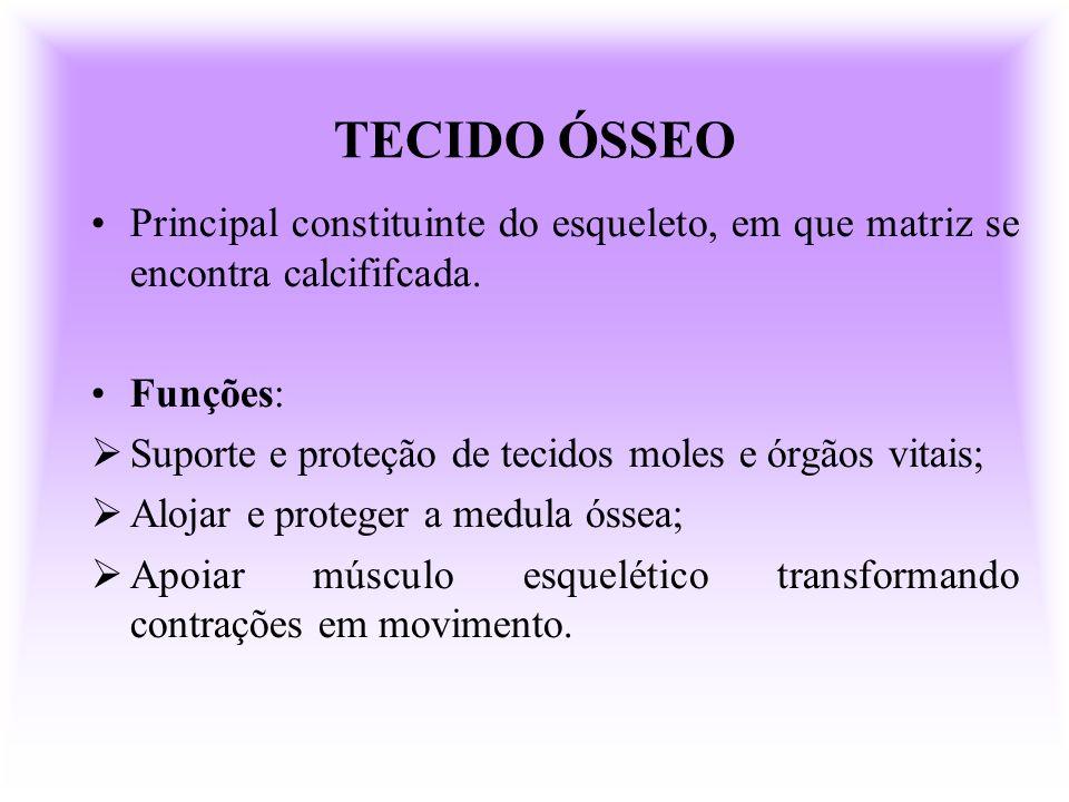 TECIDO ÓSSEO Principal constituinte do esqueleto, em que matriz se encontra calcififcada. Funções: