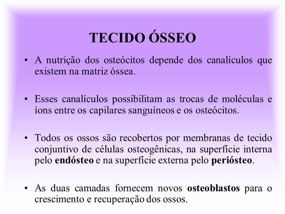 TECIDO ÓSSEO A nutrição dos osteócitos depende dos canalículos que existem na matriz óssea.