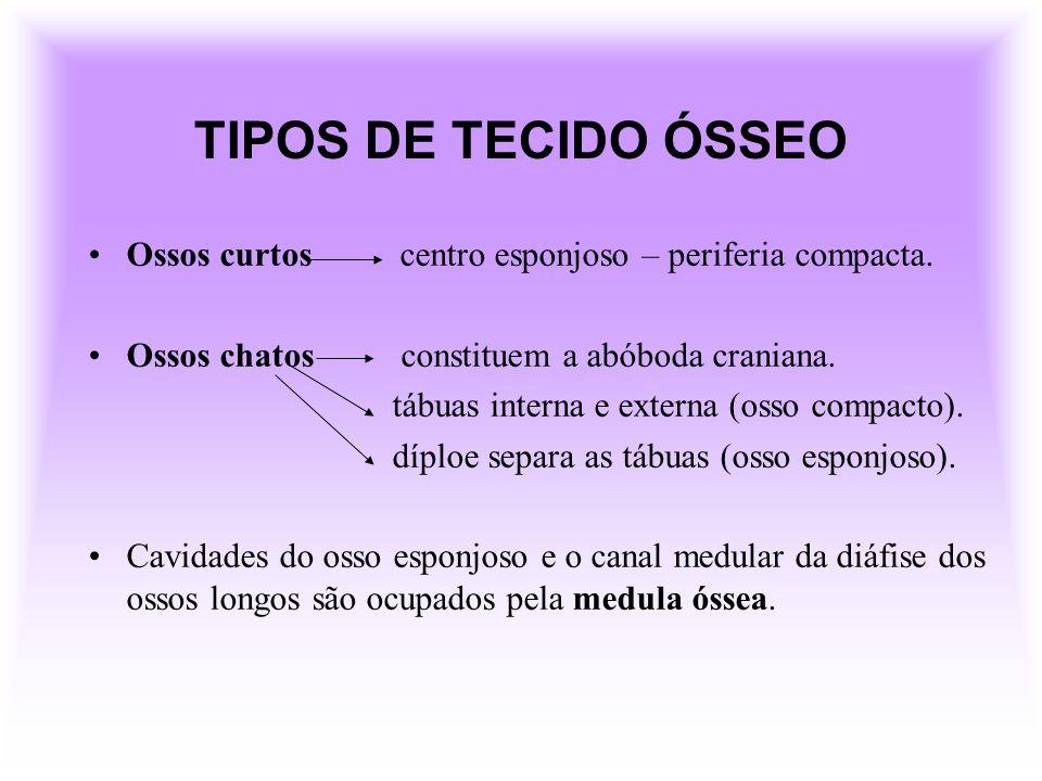 TIPOS DE TECIDO ÓSSEO Ossos curtos centro esponjoso – periferia compacta. Ossos chatos constituem a abóboda craniana.