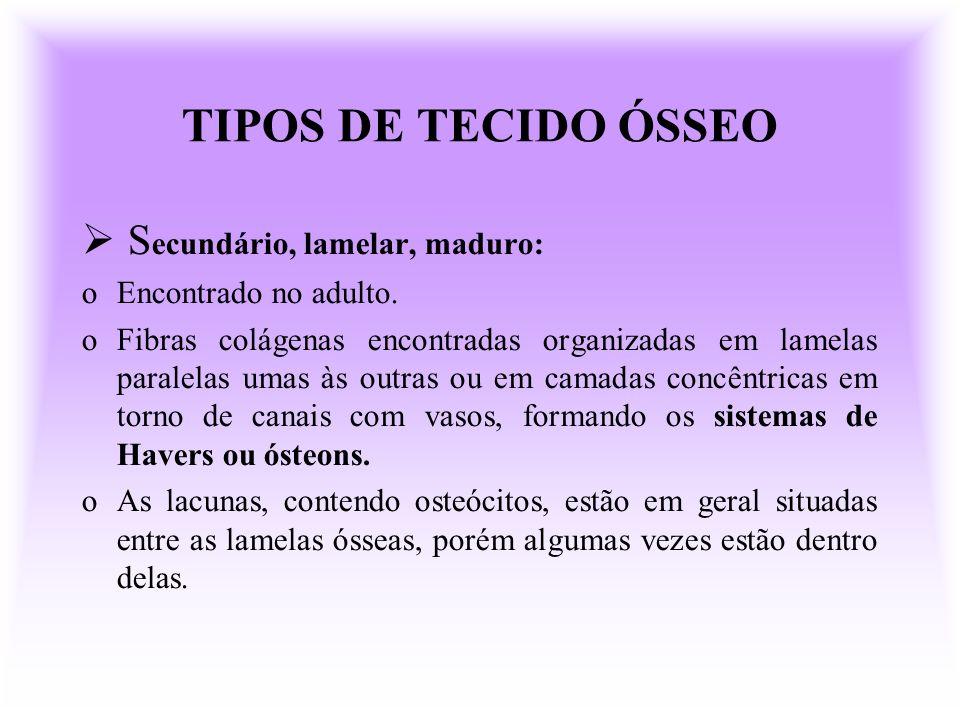TIPOS DE TECIDO ÓSSEO Secundário, lamelar, maduro: