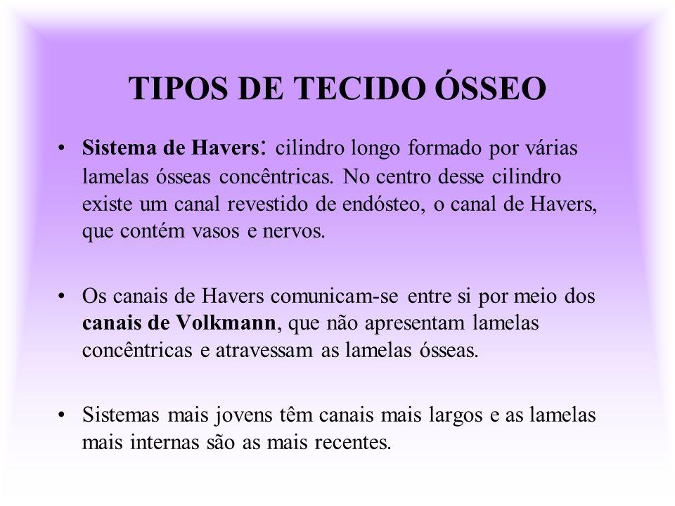 TIPOS DE TECIDO ÓSSEO
