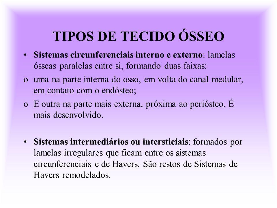TIPOS DE TECIDO ÓSSEOSistemas circunferenciais interno e externo: lamelas ósseas paralelas entre si, formando duas faixas: