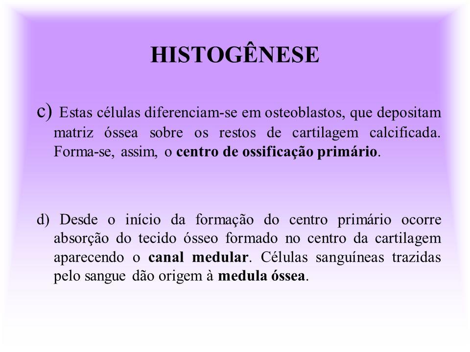 HISTOGÊNESE