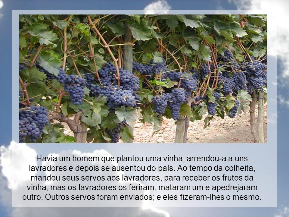 Havia um homem que plantou uma vinha, arrendou-a a uns lavradores e depois se ausentou do país.