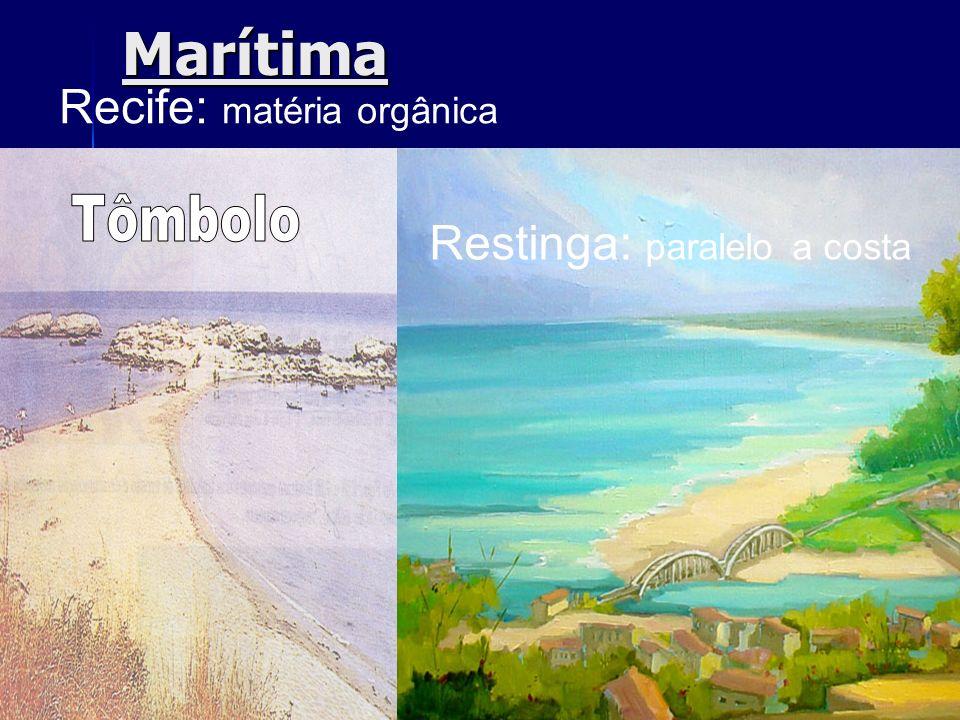 Recife: matéria orgânica