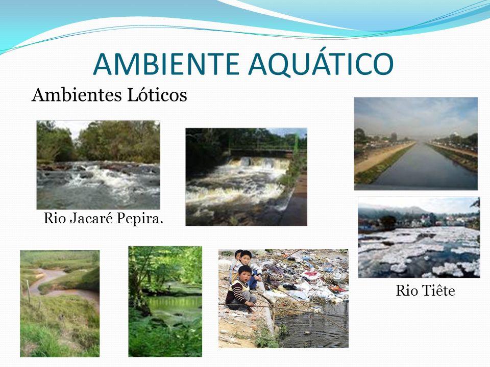 AMBIENTE AQUÁTICO Ambientes Lóticos Rio Jacaré Pepira. Rio Tiête