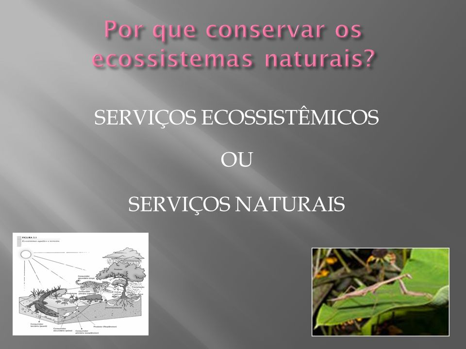Por que conservar os ecossistemas naturais