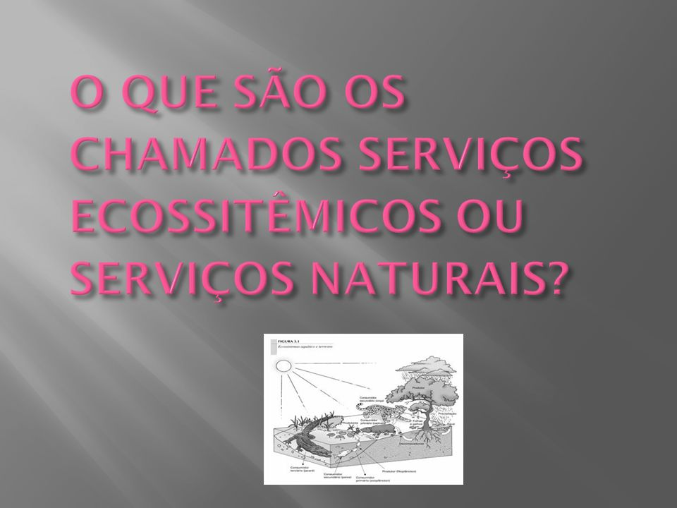 O QUE SÃO OS CHAMADOS SERVIÇOS ECOSSITÊMICOS OU SERVIÇOS NATURAIS