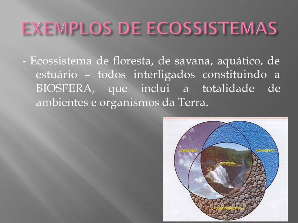 EXEMPLOS DE ECOSSISTEMAS
