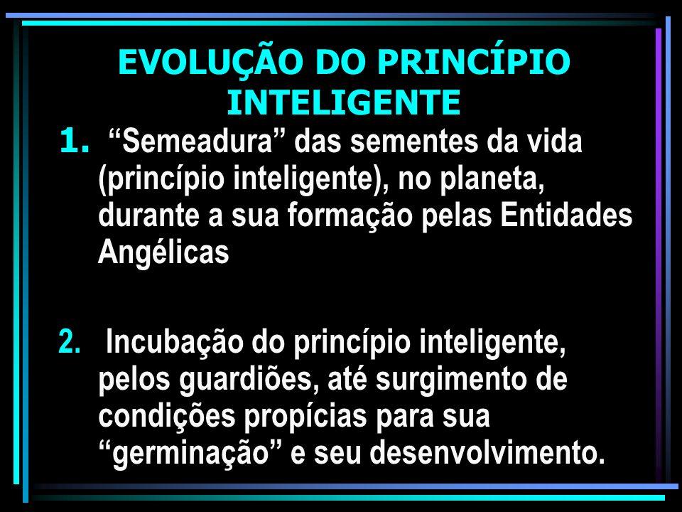 EVOLUÇÃO DO PRINCÍPIO INTELIGENTE