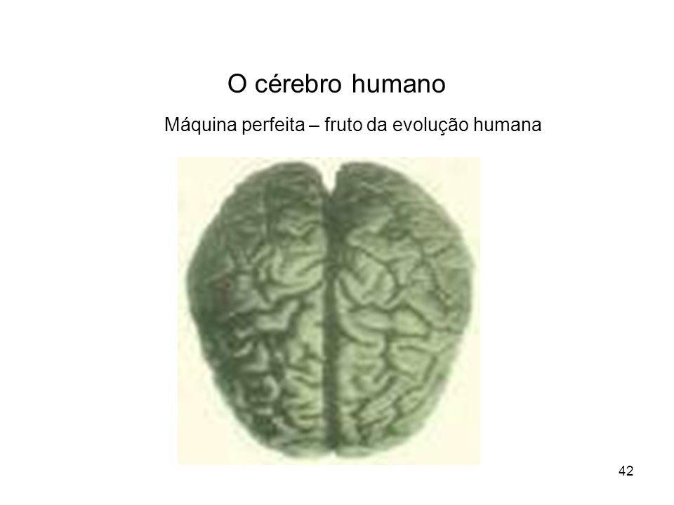 Máquina perfeita – fruto da evolução humana