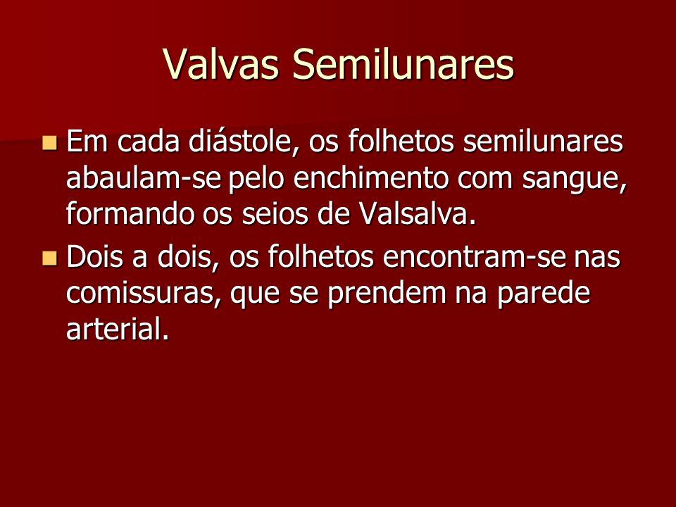 Valvas Semilunares Em cada diástole, os folhetos semilunares abaulam-se pelo enchimento com sangue, formando os seios de Valsalva.
