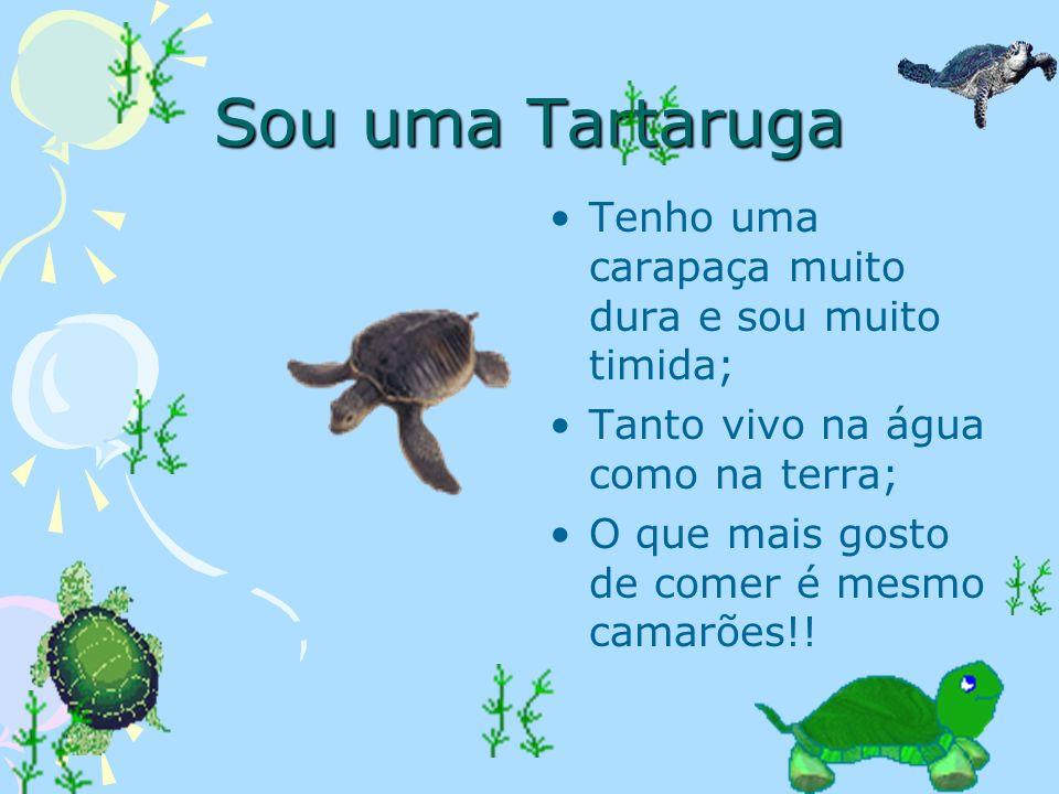 Sou uma Tartaruga Tenho uma carapaça muito dura e sou muito timida;