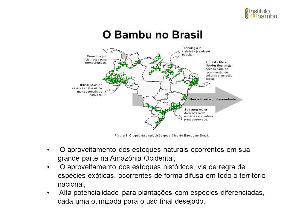 O Bambu no Brasil O aproveitamento dos estoques naturais ocorrentes em sua grande parte na Amazônia Ocidental;