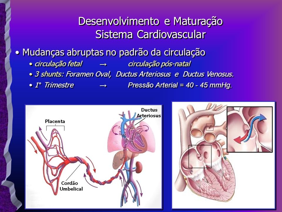 Desenvolvimento e Maturação Sistema Cardiovascular