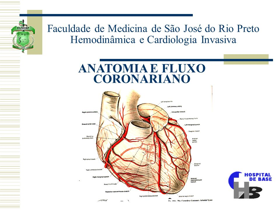 ANATOMIA E FLUXO CORONARIANO