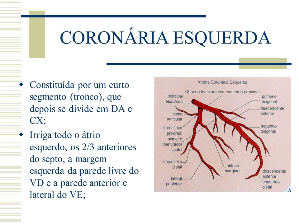 CORONÁRIA ESQUERDA Constituída por um curto segmento (tronco), que depois se divide em DA e CX;