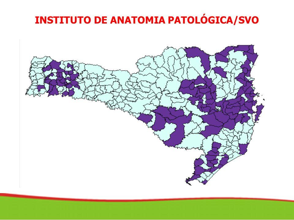 INSTITUTO DE ANATOMIA PATOLÓGICA/SVO