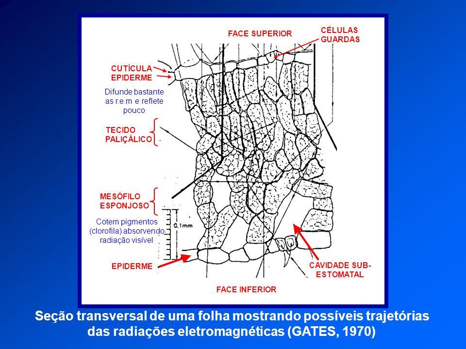 Seção transversal de uma folha mostrando possíveis trajetórias
