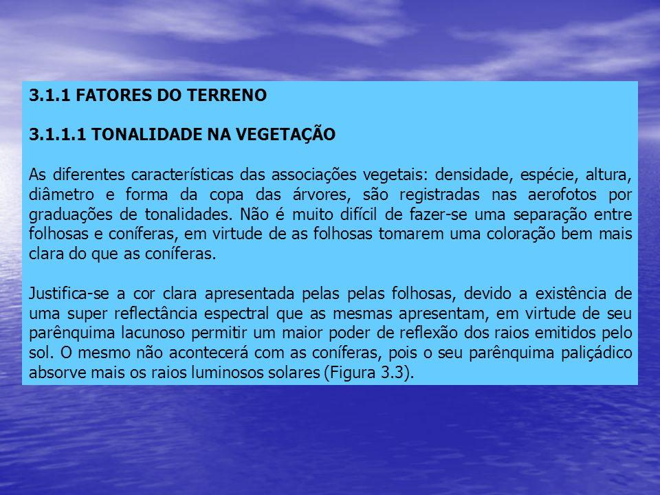 3.1.1 FATORES DO TERRENO 3.1.1.1 TONALIDADE NA VEGETAÇÃO.