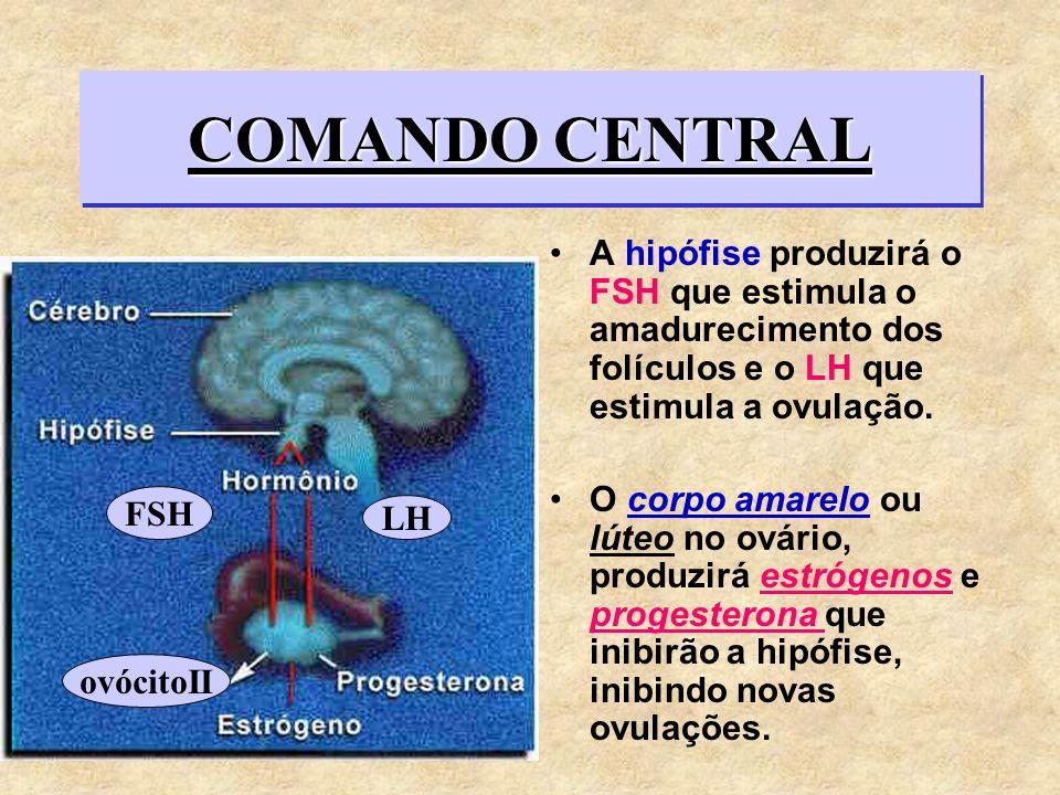 COMANDO CENTRALA hipófise produzirá o FSH que estimula o amadurecimento dos folículos e o LH que estimula a ovulação.
