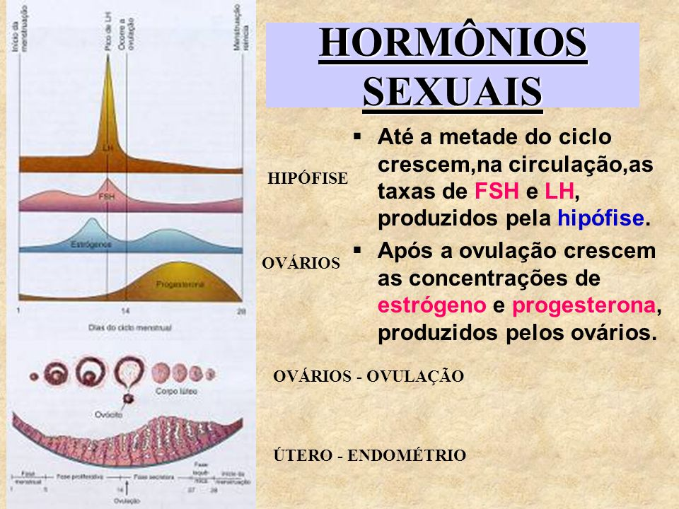 HORMÔNIOS SEXUAISAté a metade do ciclo crescem,na circulação,as taxas de FSH e LH, produzidos pela hipófise.