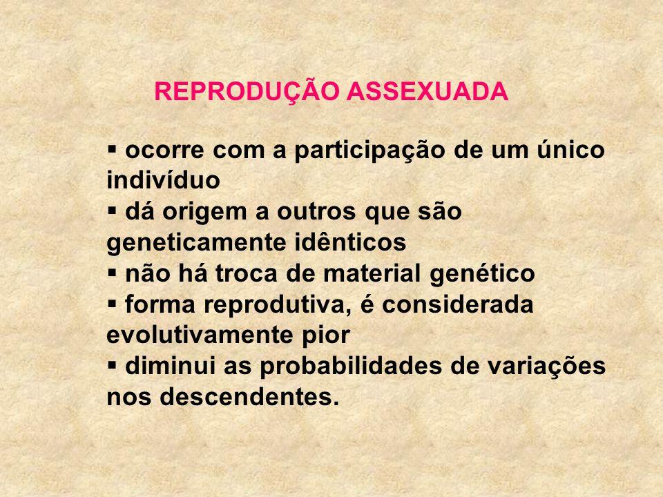 REPRODUÇÃO ASSEXUADAocorre com a participação de um único indivíduo. dá origem a outros que são geneticamente idênticos.