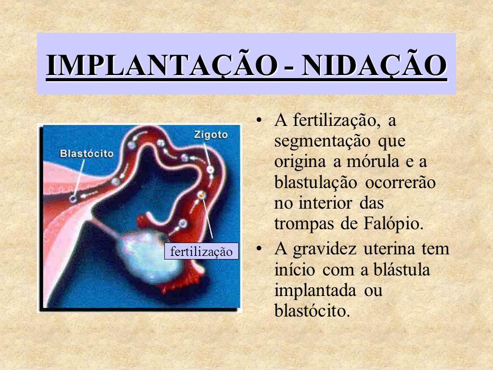 IMPLANTAÇÃO - NIDAÇÃO A fertilização, a segmentação que origina a mórula e a blastulação ocorrerão no interior das trompas de Falópio.