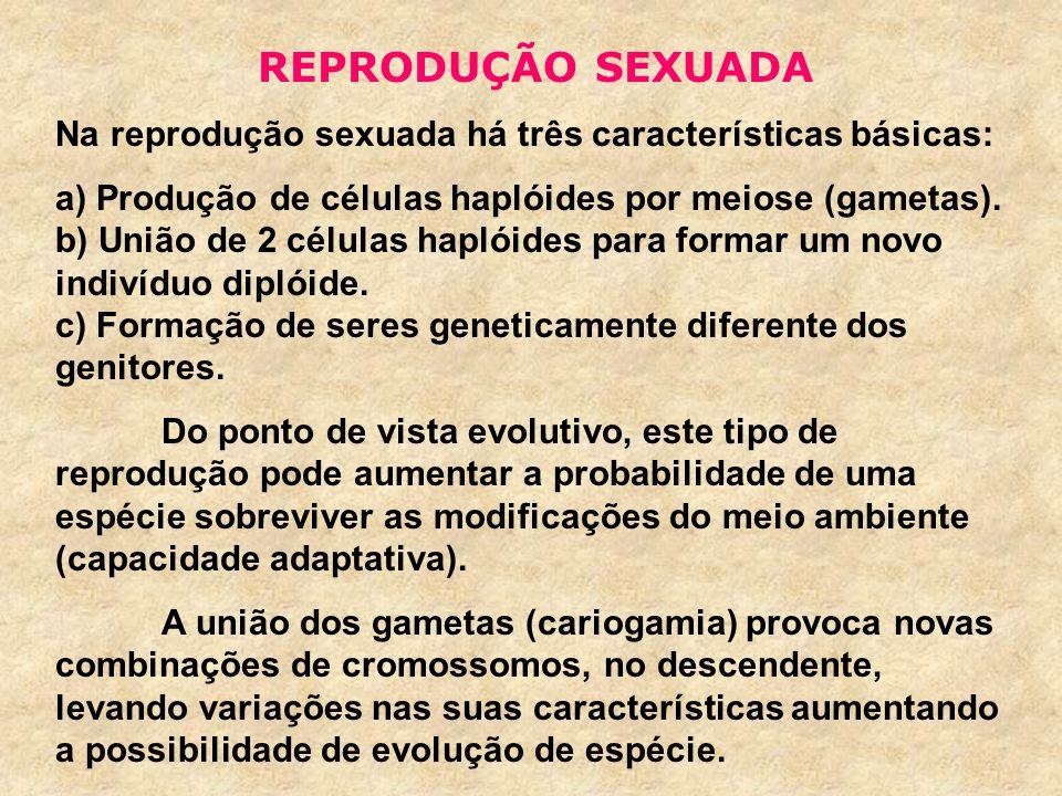 REPRODUÇÃO SEXUADA Na reprodução sexuada há três características básicas: