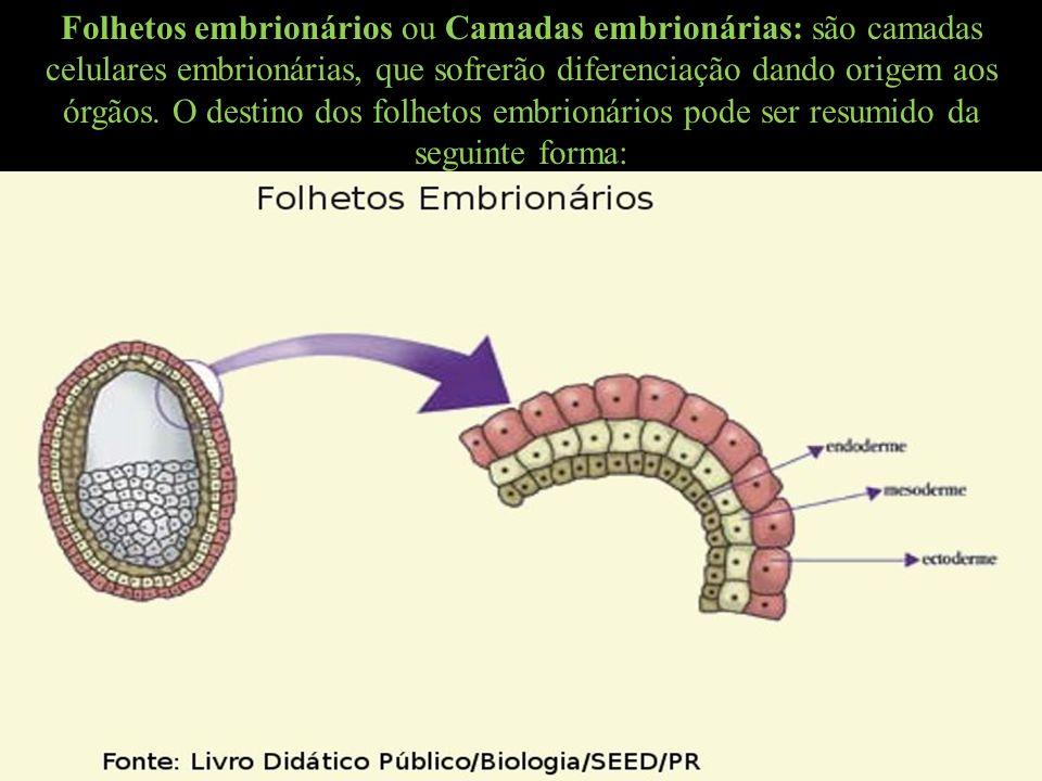 Folhetos embrionários ou Camadas embrionárias: são camadas celulares embrionárias, que sofrerão diferenciação dando origem aos órgãos.