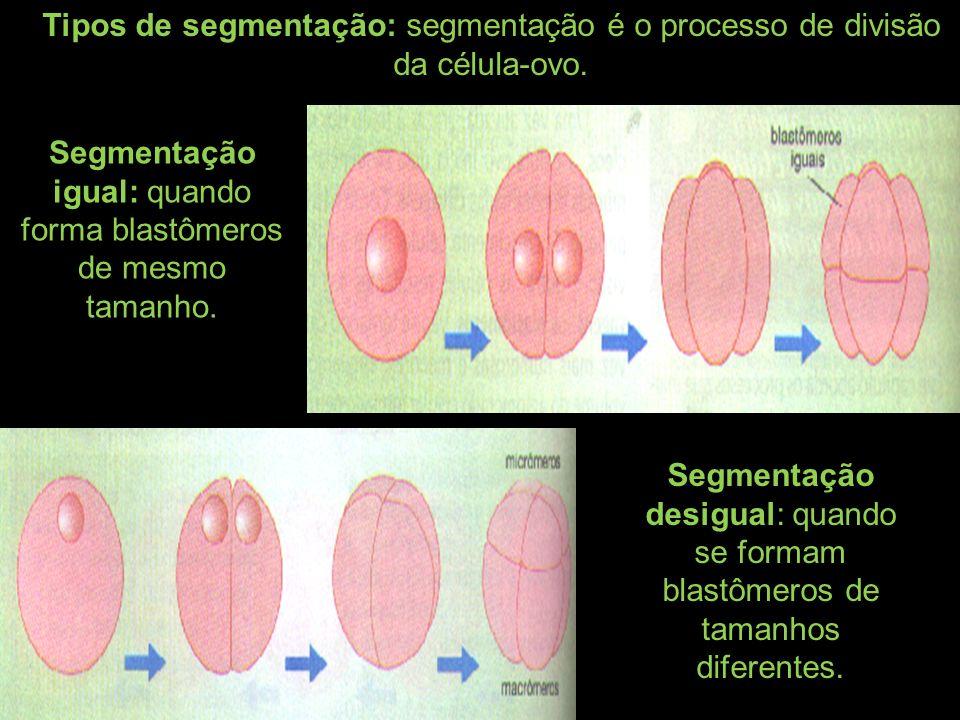Segmentação igual: quando forma blastômeros de mesmo tamanho.
