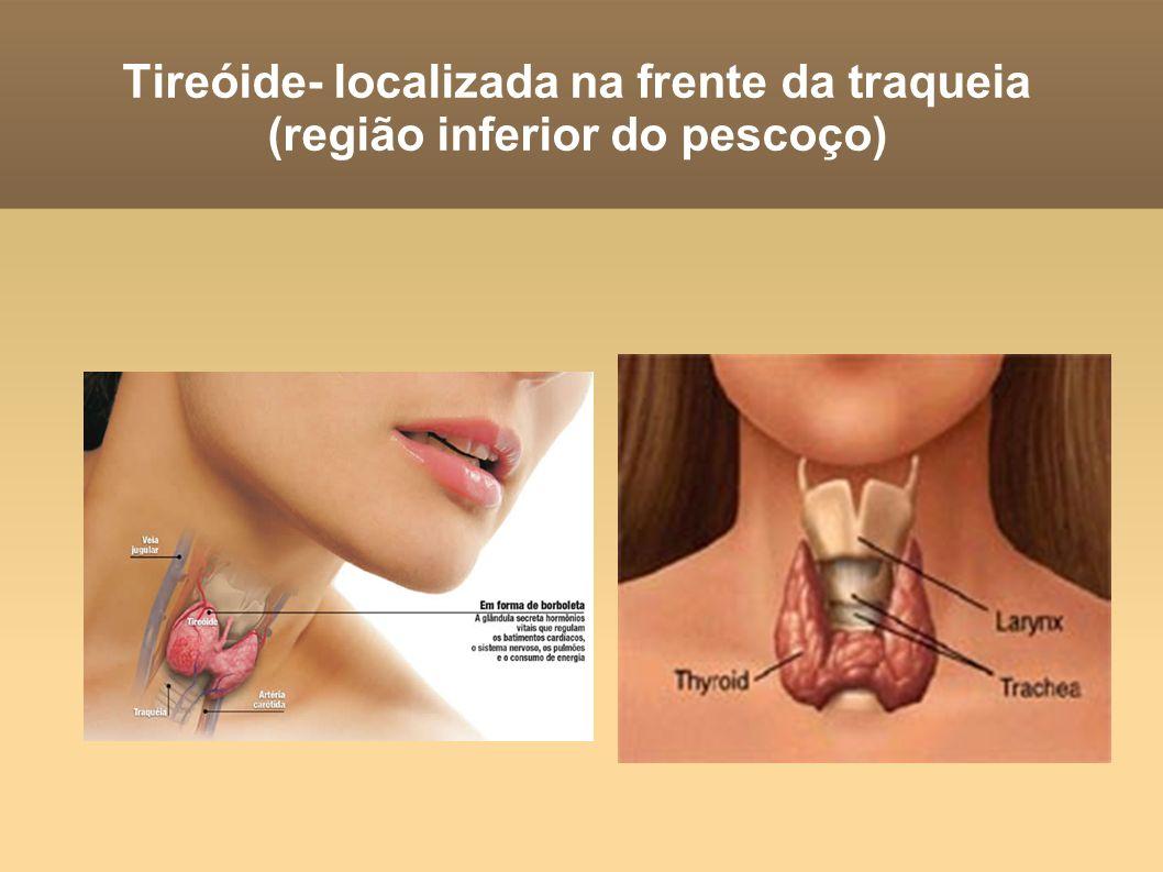 Tireóide- localizada na frente da traqueia (região inferior do pescoço)