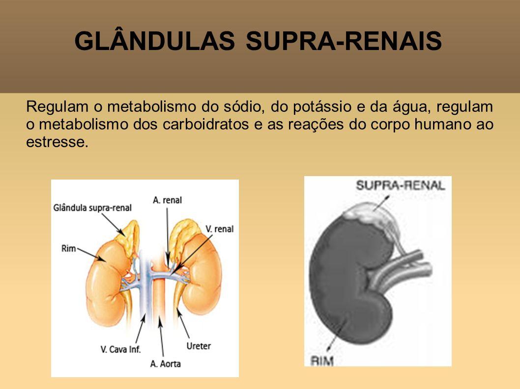 GLÂNDULAS SUPRA-RENAIS