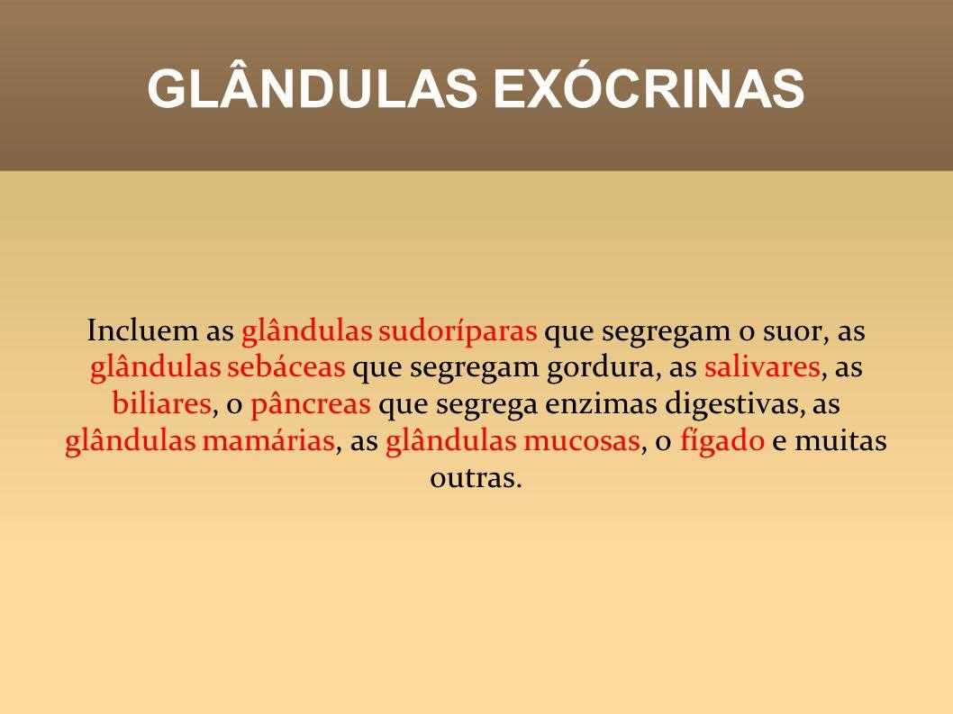 GLÂNDULAS EXÓCRINAS