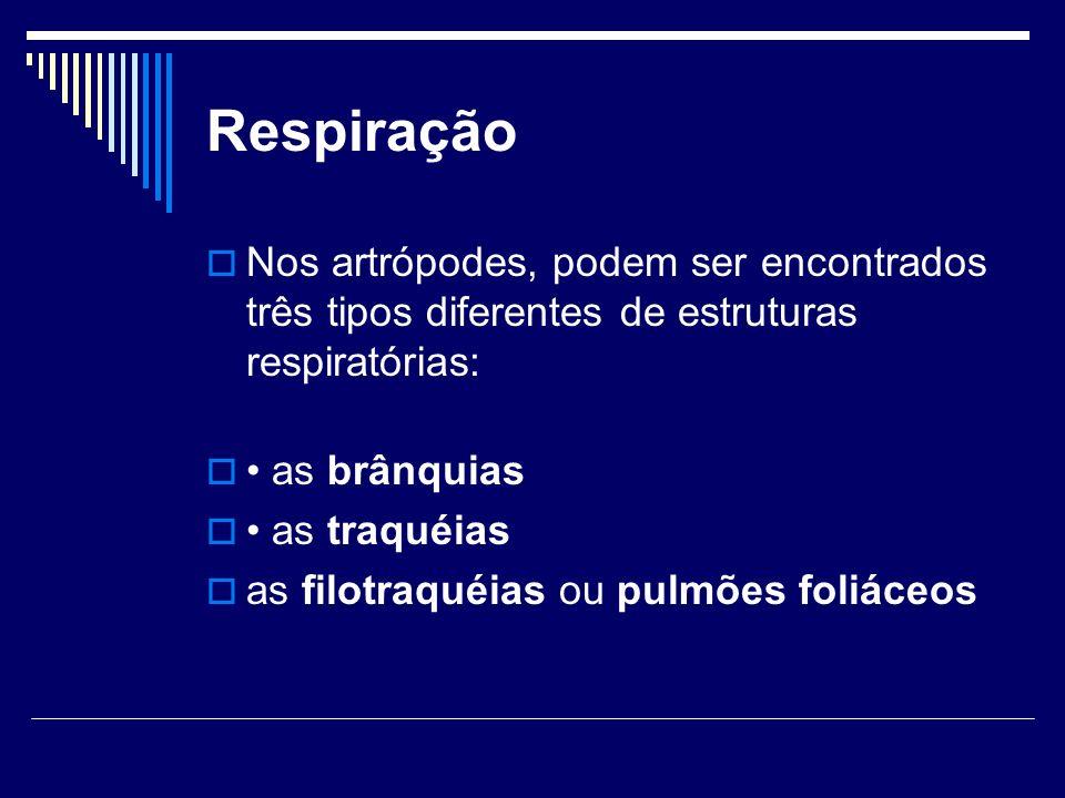 Respiração Nos artrópodes, podem ser encontrados três tipos diferentes de estruturas respiratórias: