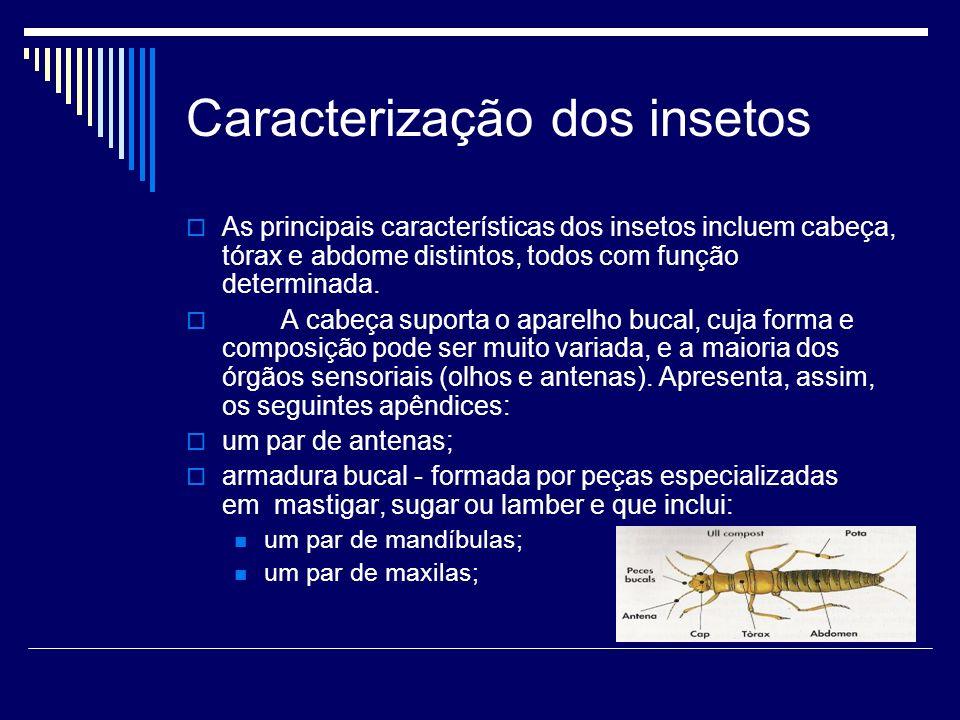 Caracterização dos insetos