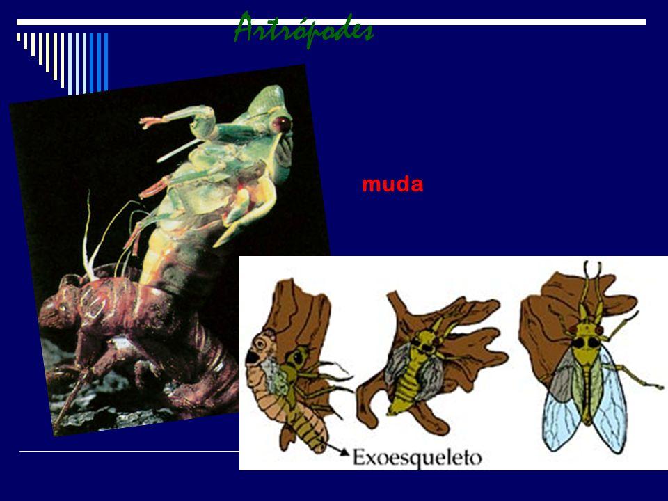 Artrópodes muda