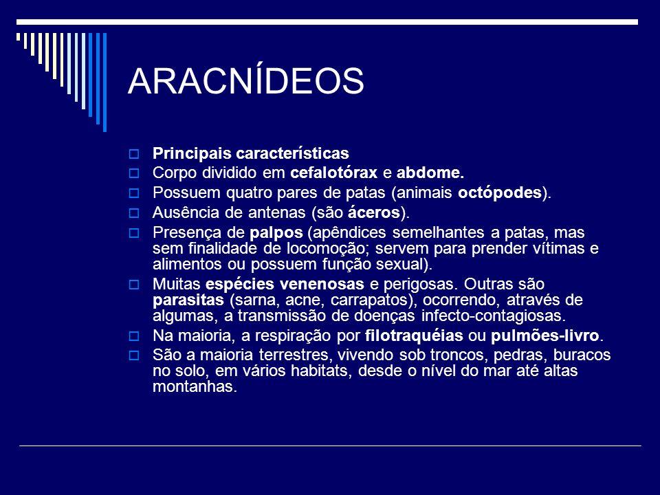 ARACNÍDEOS Principais características