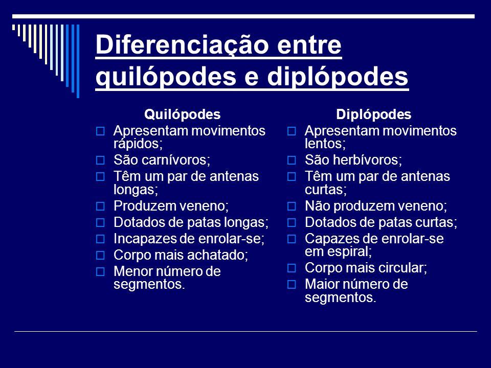 Diferenciação entre quilópodes e diplópodes