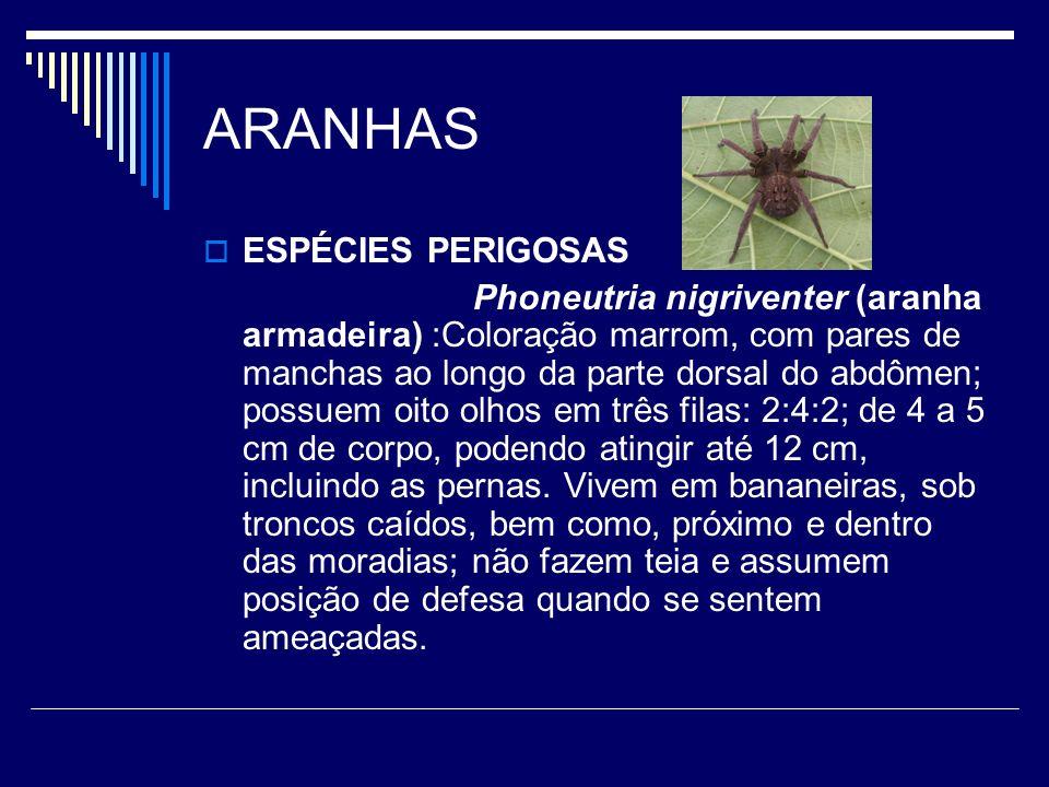 ARANHAS ESPÉCIES PERIGOSAS