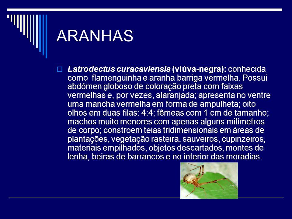 ARANHAS