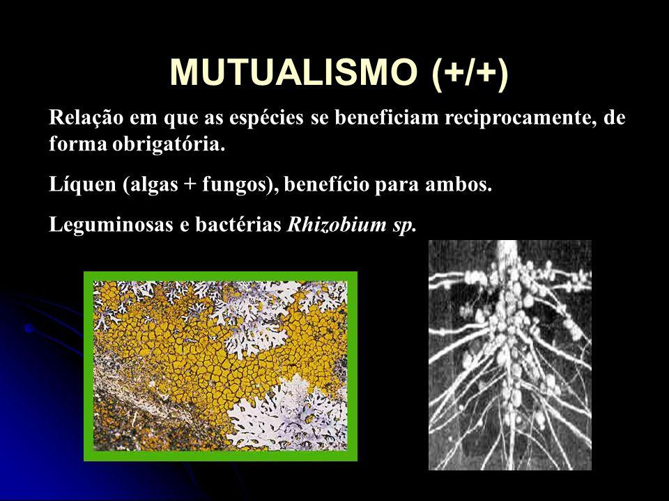 MUTUALISMO (+/+)Relação em que as espécies se beneficiam reciprocamente, de forma obrigatória. Líquen (algas + fungos), benefício para ambos.