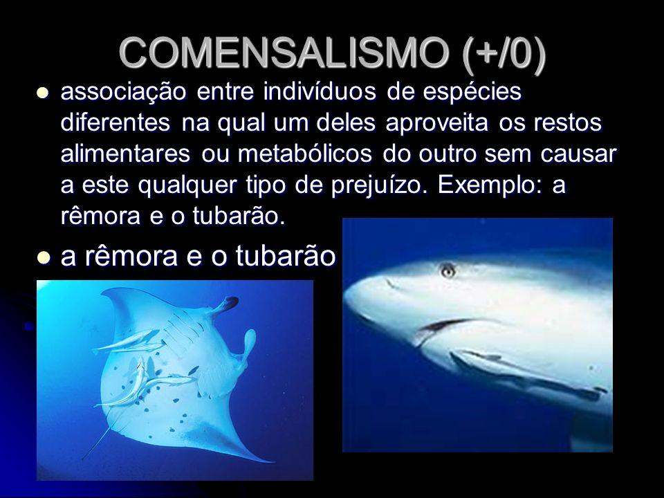 COMENSALISMO (+/0) a rêmora e o tubarão