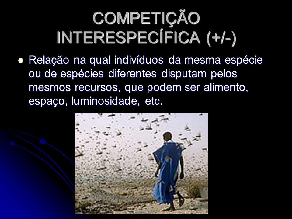 COMPETIÇÃO INTERESPECÍFICA (+/-)