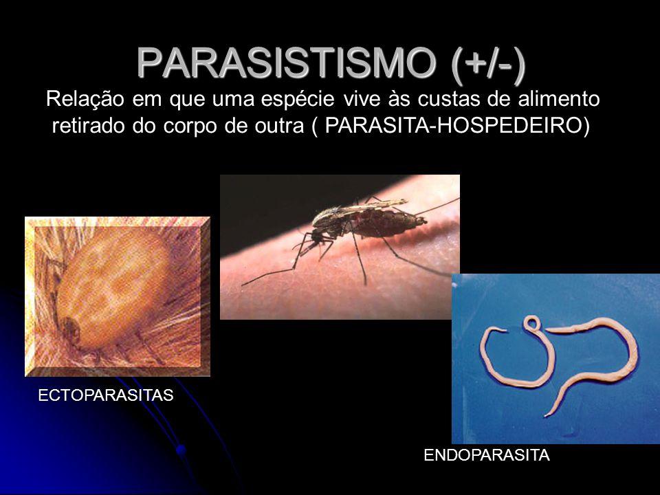 PARASISTISMO (+/-) Relação em que uma espécie vive às custas de alimento. retirado do corpo de outra ( PARASITA-HOSPEDEIRO)