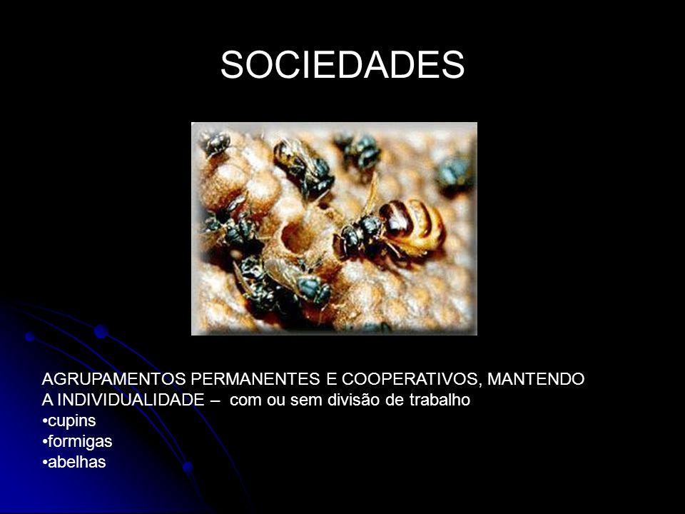 SOCIEDADES AGRUPAMENTOS PERMANENTES E COOPERATIVOS, MANTENDO