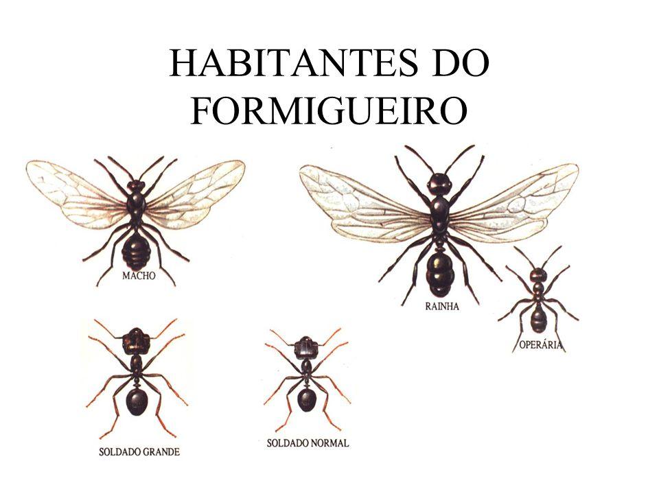 HABITANTES DO FORMIGUEIRO