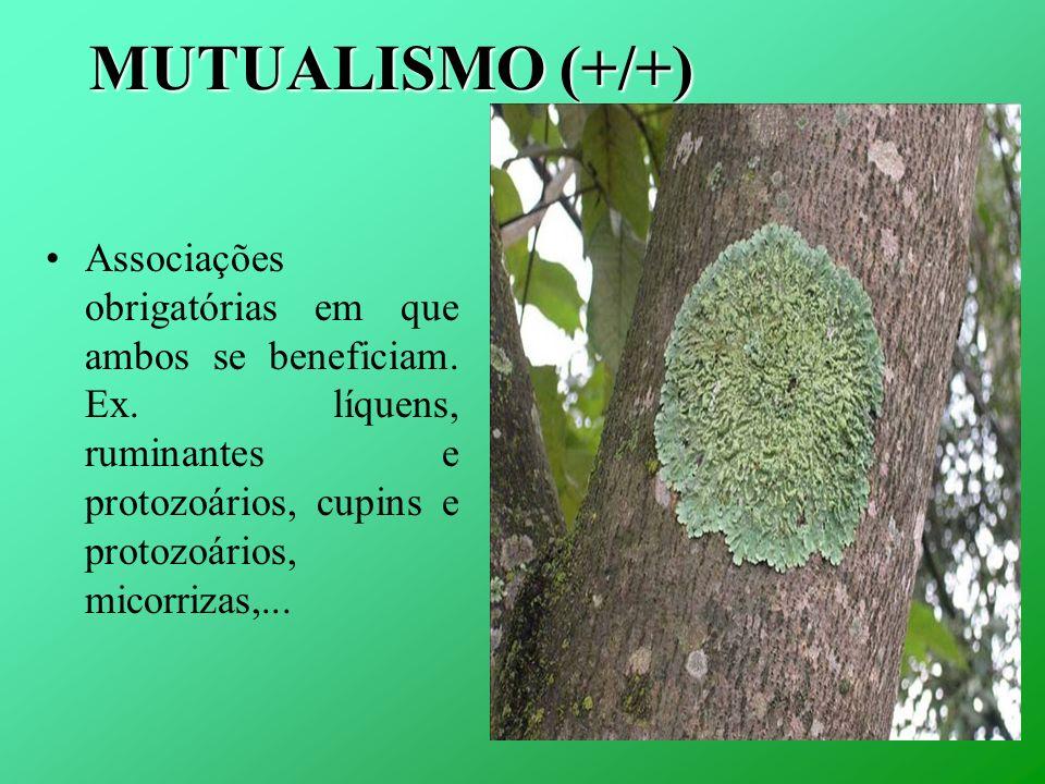 MUTUALISMO (+/+) Associações obrigatórias em que ambos se beneficiam.