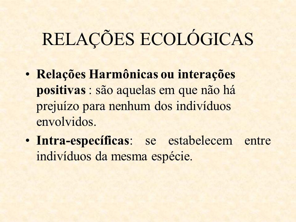 RELAÇÕES ECOLÓGICAS Relações Harmônicas ou interações positivas : são aquelas em que não há prejuízo para nenhum dos indivíduos envolvidos.